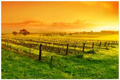Barossa_Valley